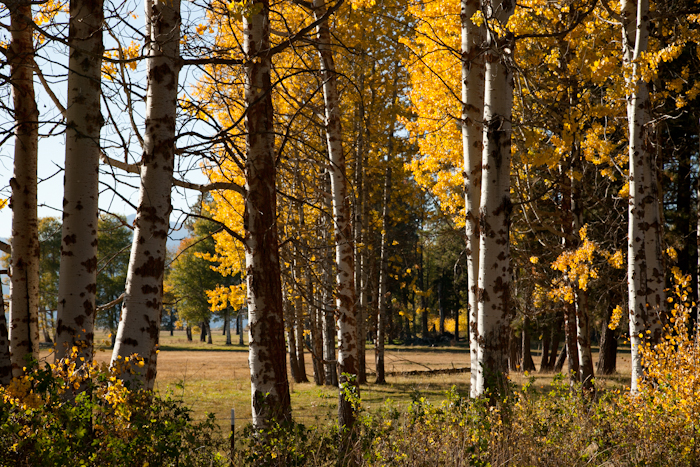 2011 fall color 3.jpg