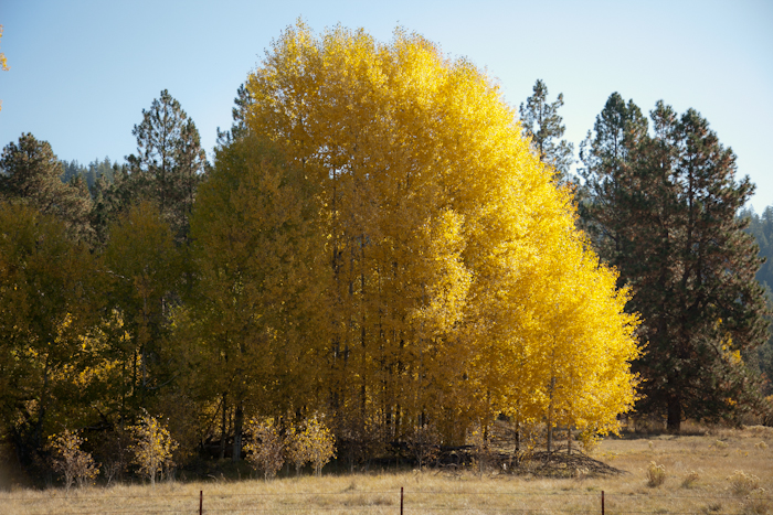 2011 fall color 5.jpg