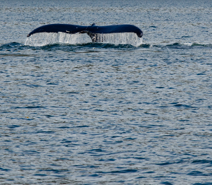 Alaska Cruise 17.jpg