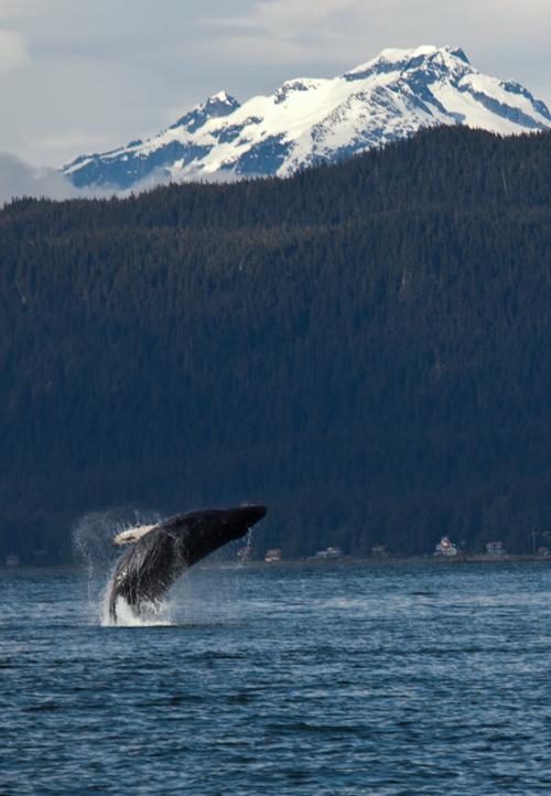 Alaska Cruise 4.jpg