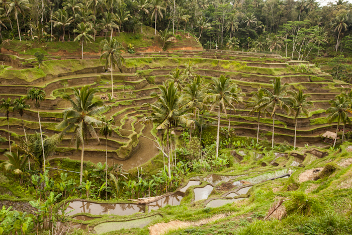 Bali 3 No wr-1573.jpg