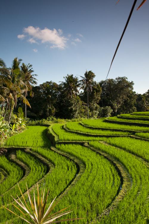 Bali 4 No wr-1641.jpg