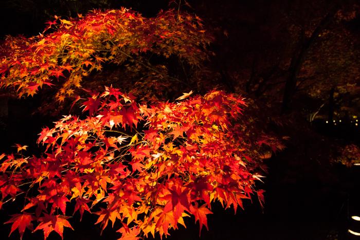 Kyoto 2-3876.jpg