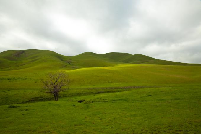 Rolling Hills 001.jpg
